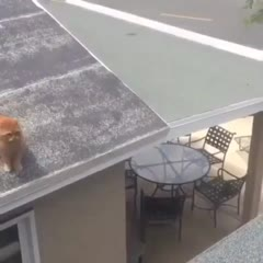 Not all cats can jump