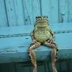 a_frog_sitting_on_a_bench_like_a_human