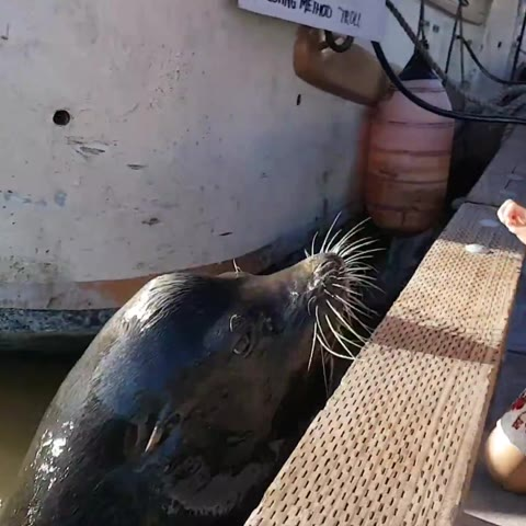 Sea lion drags girl into Steveston waters